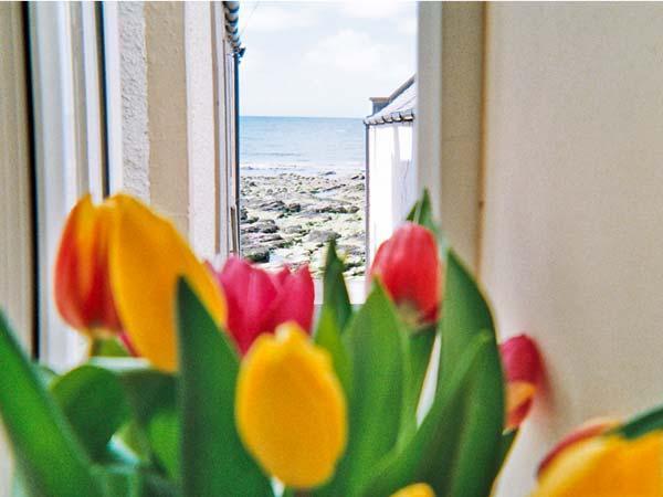 Ellie-Ann Cottage